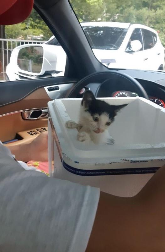 赤ちゃん野良猫と出会った話。