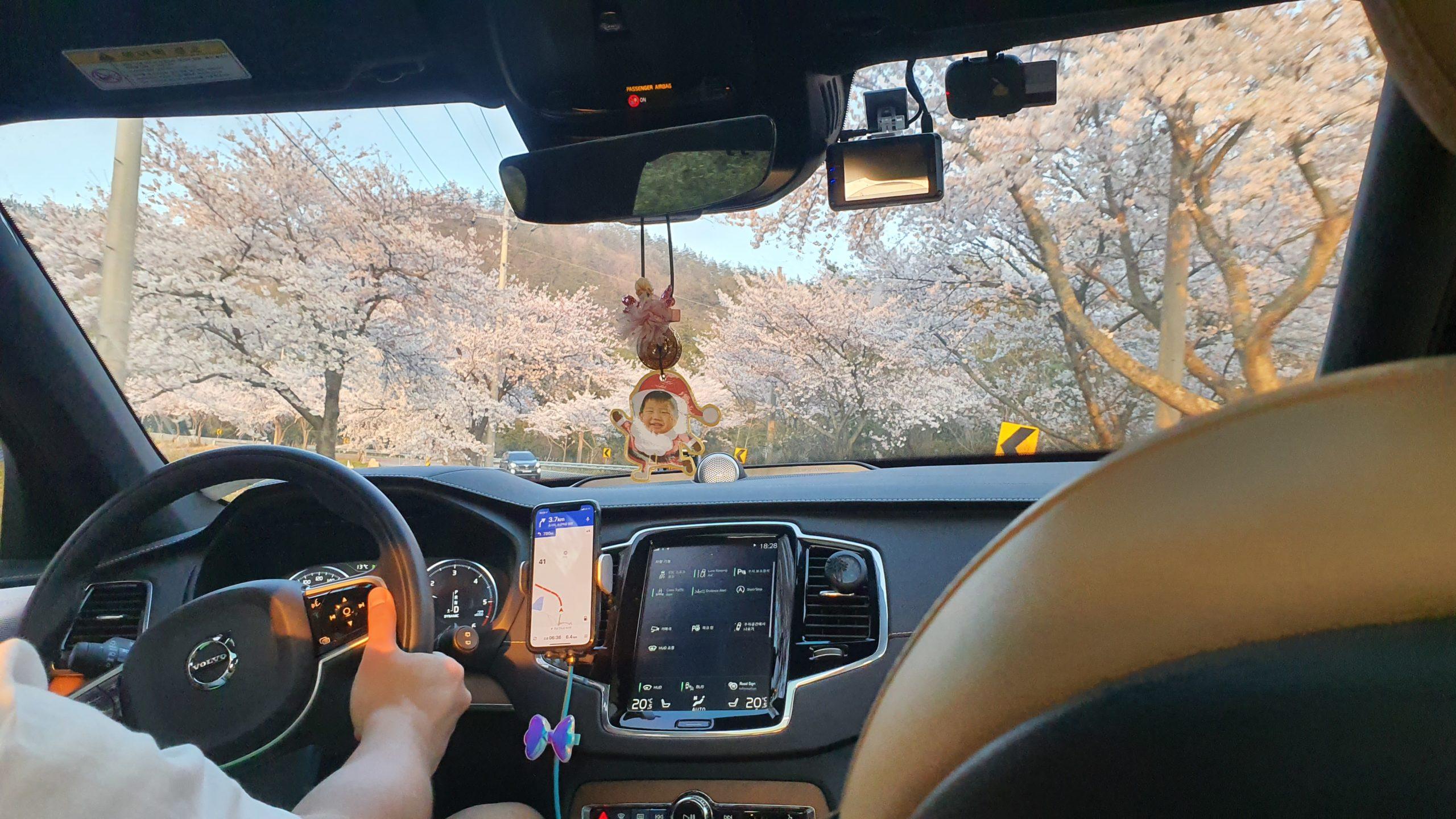 【珍島4日目】 桜とBBQ 花よりお肉。