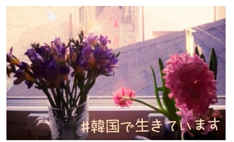 【感謝/감사】新ブログを開設して1年が経ちました。